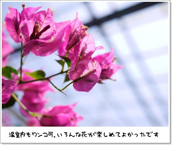 14デビュー戦.JPG