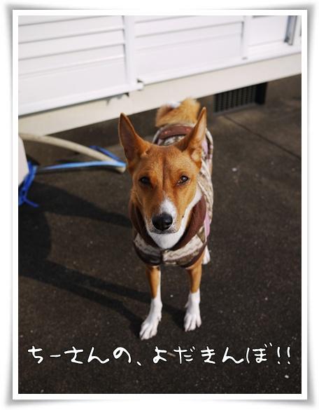 ちいさんのよだきんぼ!.jpg