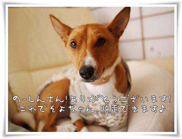 のーしんさんありがとう.jpg