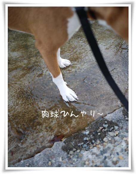 ひんやりんこ.jpg