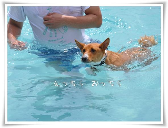 初泳ぎ.jpg