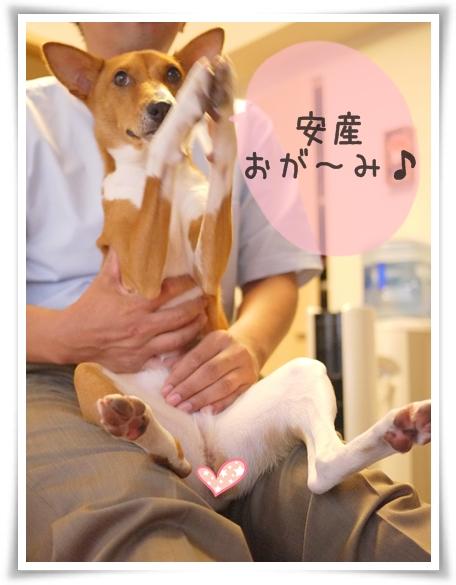 安産犬.jpg