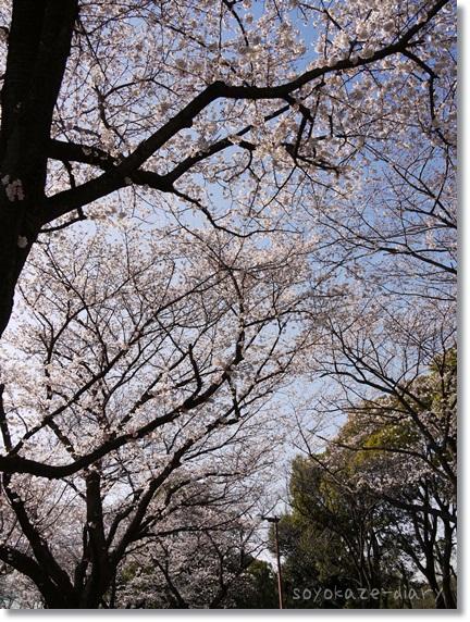 水元公園.jpg