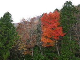 色づく木々.jpg