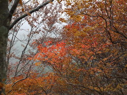 色づく木々2.jpg