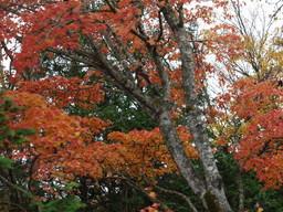 色づく木々3.jpg